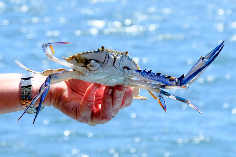 An Escape to Mandurah for Crab Fest 2017